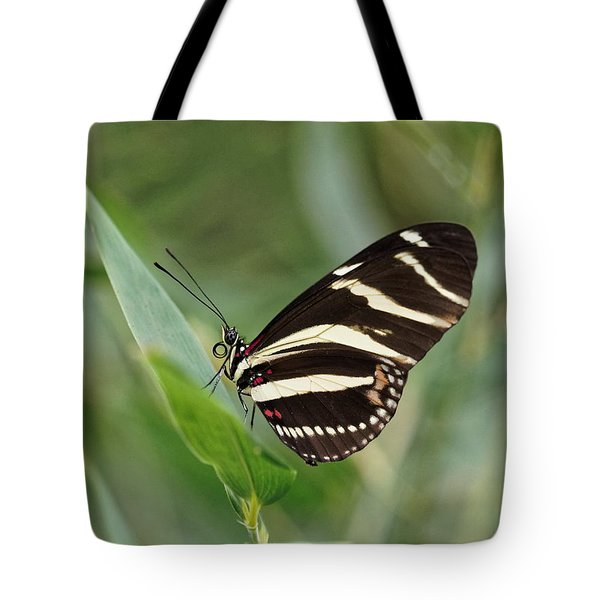 Tote Bag featuring the photograph Zebra Longwing Butterfly - 2 by Paul Gulliver