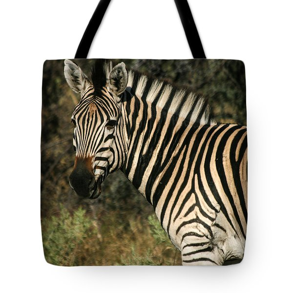 Zebra Watching Sq Tote Bag
