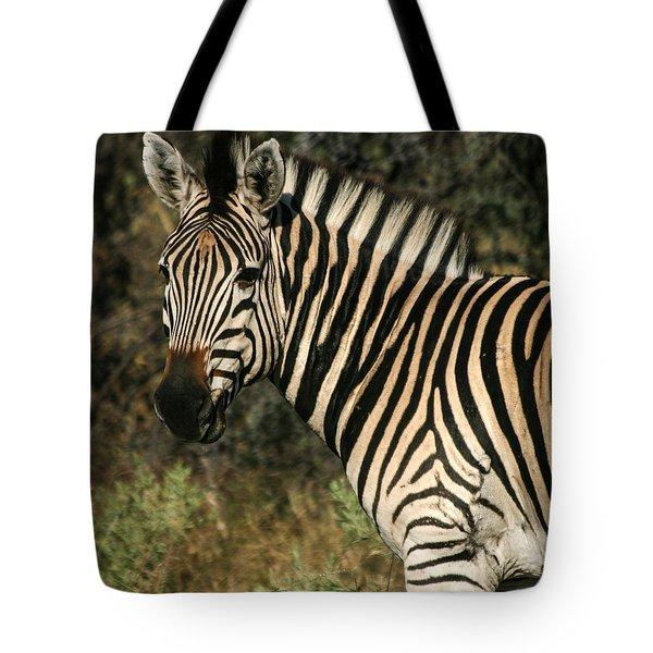 Zebra Watching Sq Tote Bag