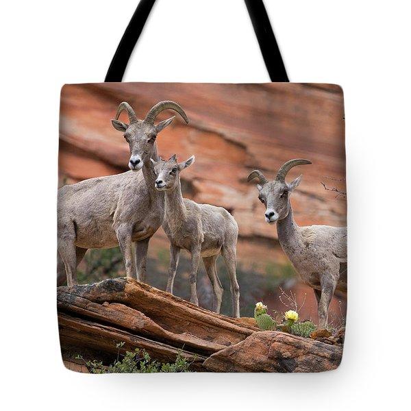 Zion Big Horn Sheep Tote Bag