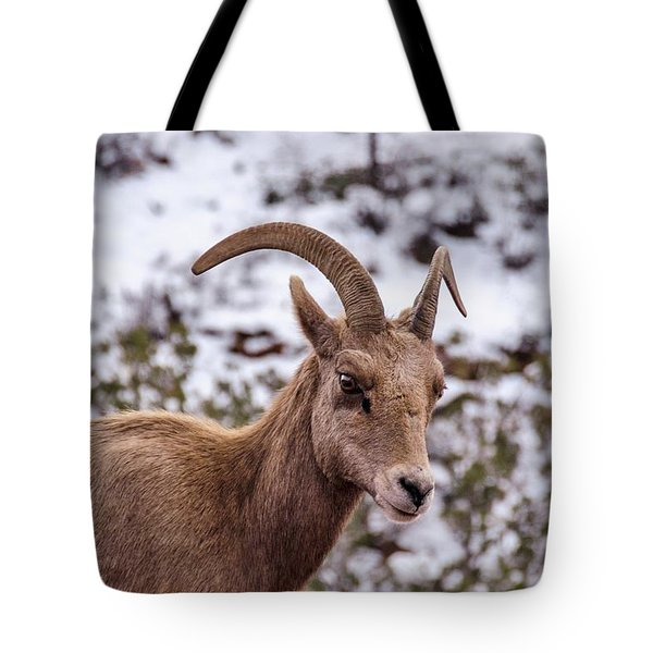Zion Bighorn Sheep Close-up Tote Bag