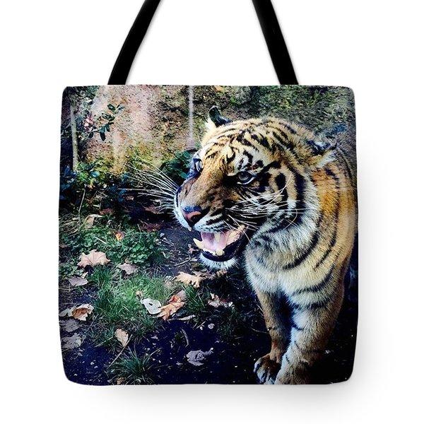 Tiger  Tote Bag by Cristina Brandi