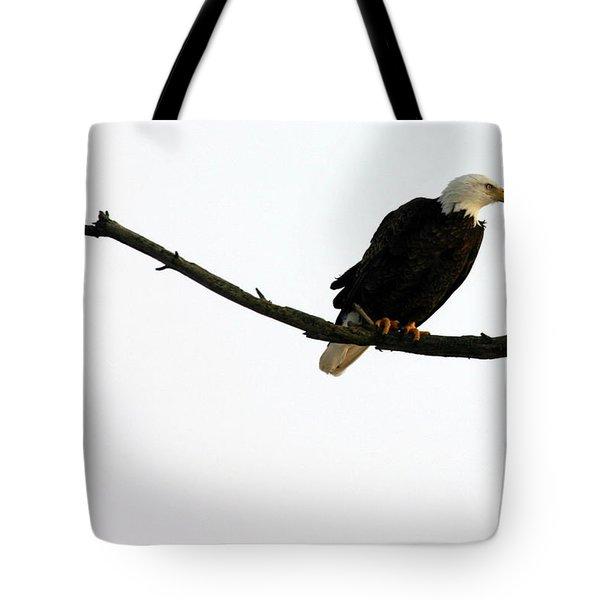 Bald Eagle 120501 Tote Bag