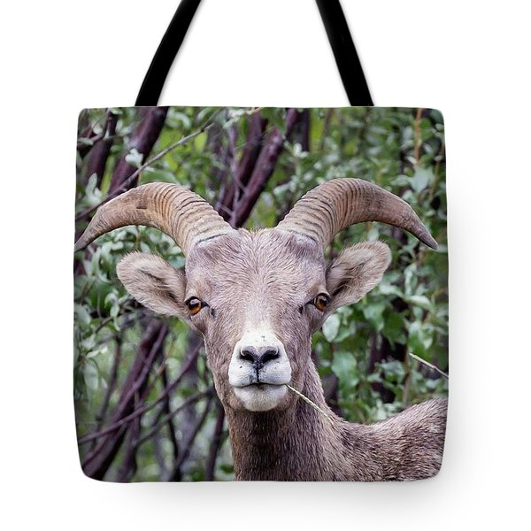 Tote Bag featuring the photograph Big Horn Sheep by Paul Schultz