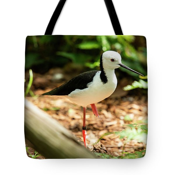Tote Bag featuring the photograph Black-winged Stilt by Rob D Imagery