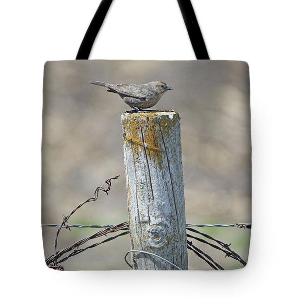 Brown-headed Cowbird Tote Bag
