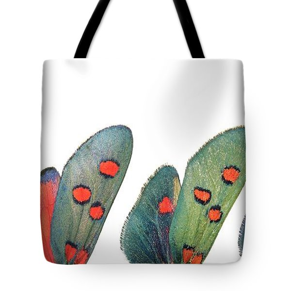 Burnet Moth Wings Tote Bag