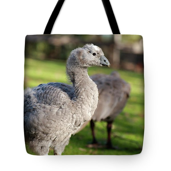 Cape Barren Goose And Geese Tote Bag
