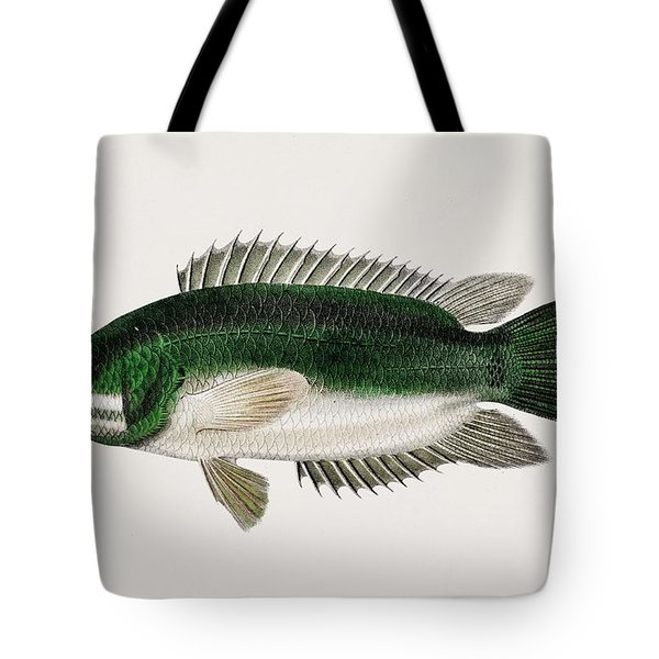 Climbing Perch  Anabas Testudineus  Illustrated By Charles Dessalines D  Orbigny  1806-1876  2 Tote Bag
