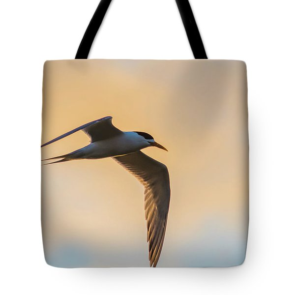 Crested Tern In The Early Morning Light Tote Bag