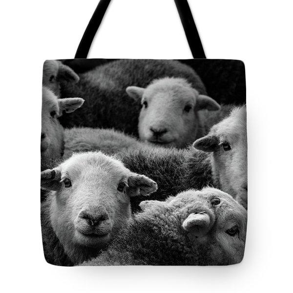Flock Of Herdwicks Tote Bag