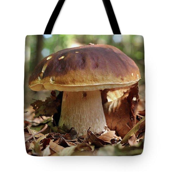 King Boletus - Edible Mushroom Tote Bag