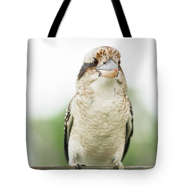 Tote Bag featuring the photograph Kookaburra Gracefully Resting During The Day. by Rob D Imagery