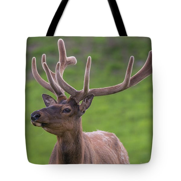 Tote Bag featuring the photograph ME1 by Joshua Able's Wildlife