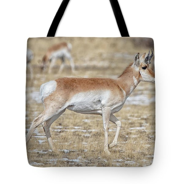 Tote Bag featuring the photograph Pronghorn by Bitter Buffalo Photography