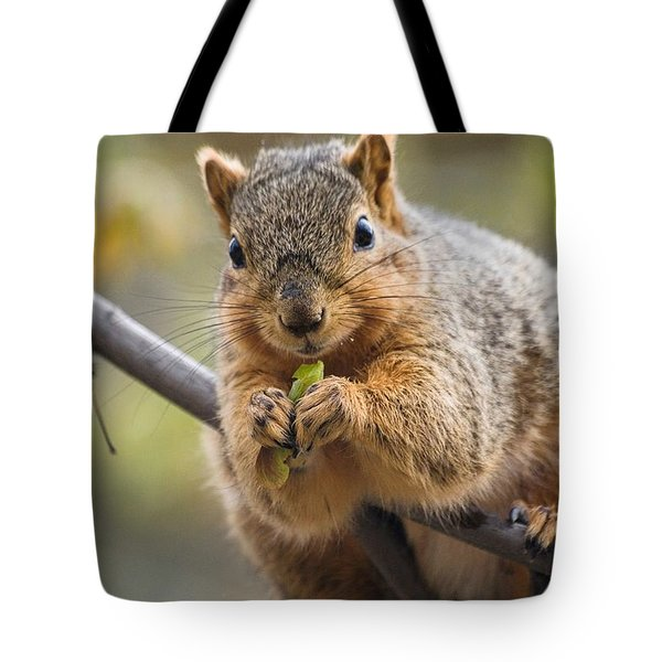 Snacking Squirrel Tote Bag