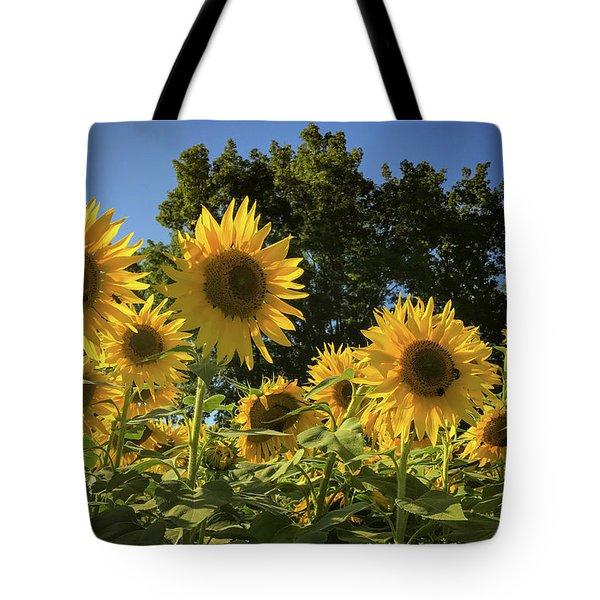 Sunlit Sunflowers Tote Bag