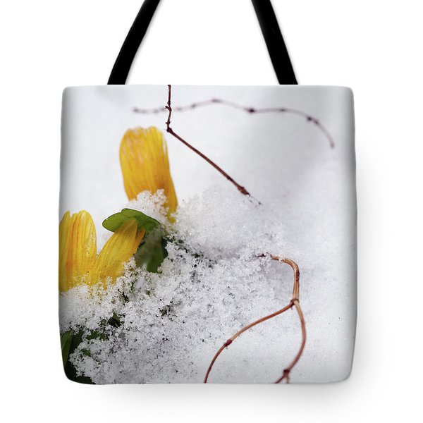 Winter Aconite Flowering In The Snow Tote Bag