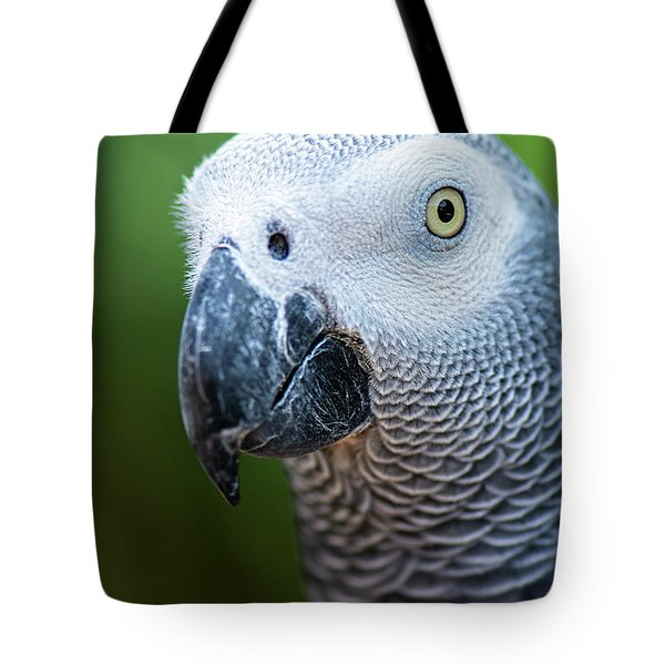 Tote Bag featuring the photograph African Grey Parrot by Rob D Imagery