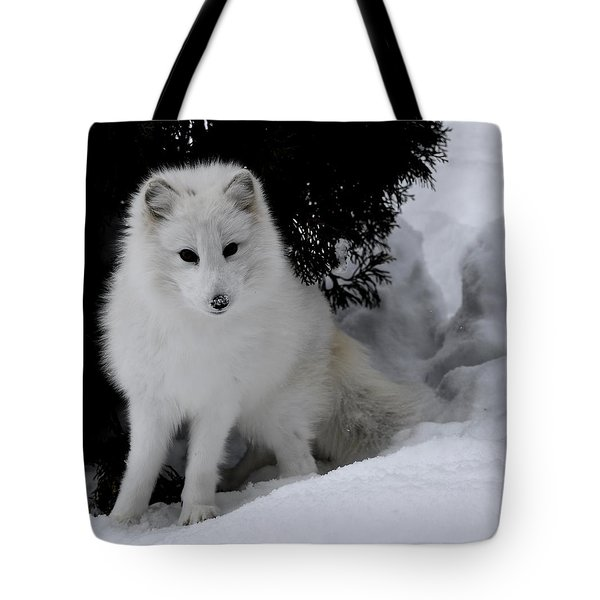Artic Fox Tote Bag