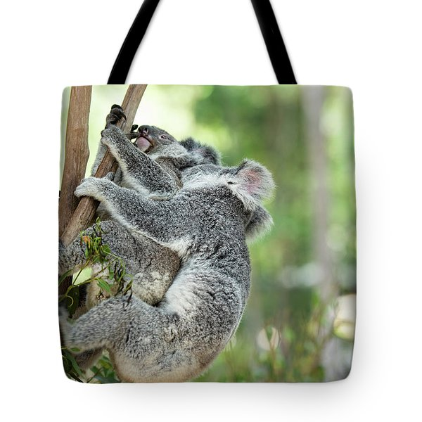 Tote Bag featuring the photograph Australian Koalas by Rob D Imagery