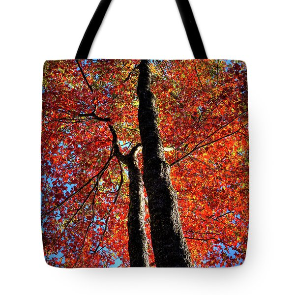Tote Bag featuring the photograph Autumn Reds by David Patterson