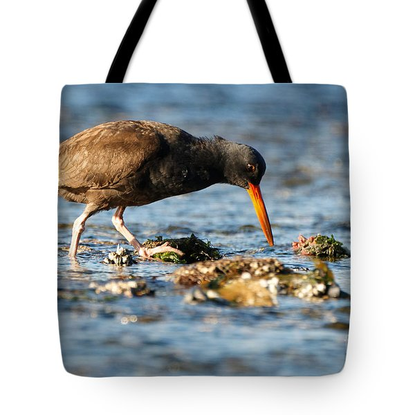 Tote Bag featuring the photograph Black Oystercatcher by Sue Harper