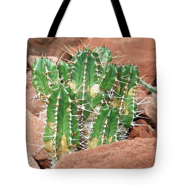 Euphorbia Resinifera - Resin Spurge Tote Bag