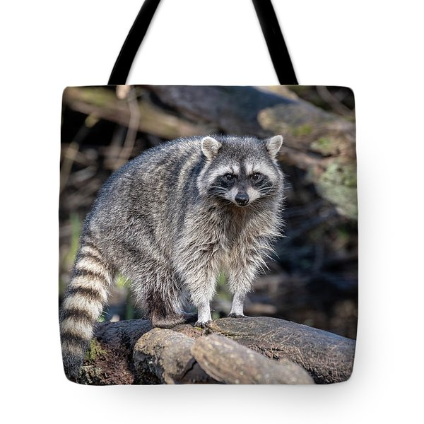 Tote Bag featuring the photograph Raccoon by Ross G Strachan