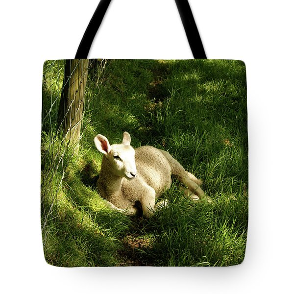 20/06/14  Keswick. Lamb In The Woods. Tote Bag