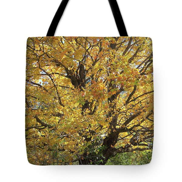 2018 Edna's Tree Up Close Tote Bag