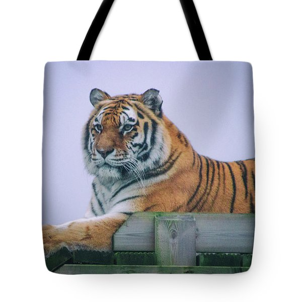 Amur Tiger Tote Bag