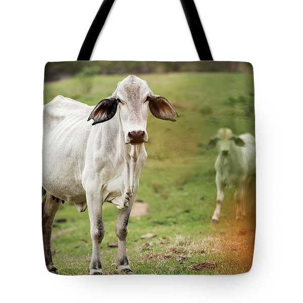 Tote Bag featuring the photograph Australian Cow by Rob D Imagery
