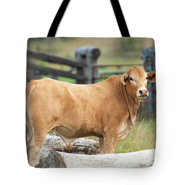 Tote Bag featuring the photograph Bull In The Country Side. by Rob D Imagery