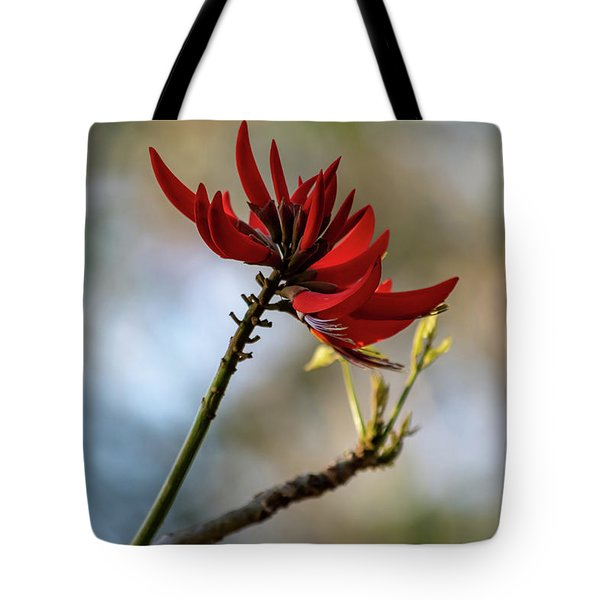 Coral Tree Flowers Tote Bag