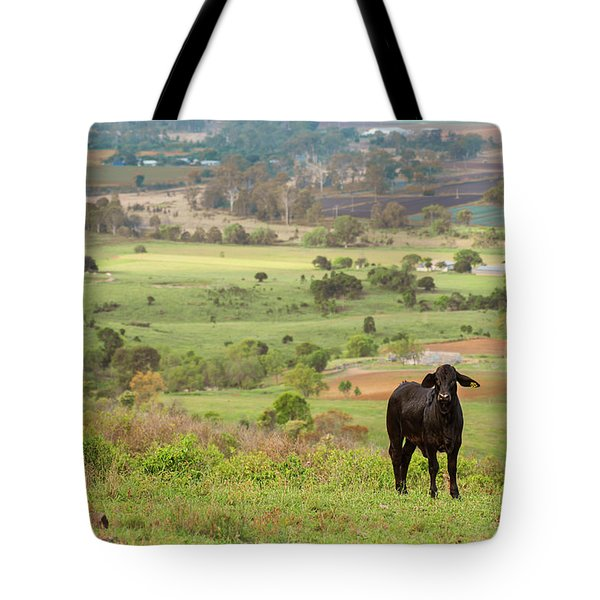 Tote Bag featuring the photograph Cow Outside In The Paddock by Rob D Imagery