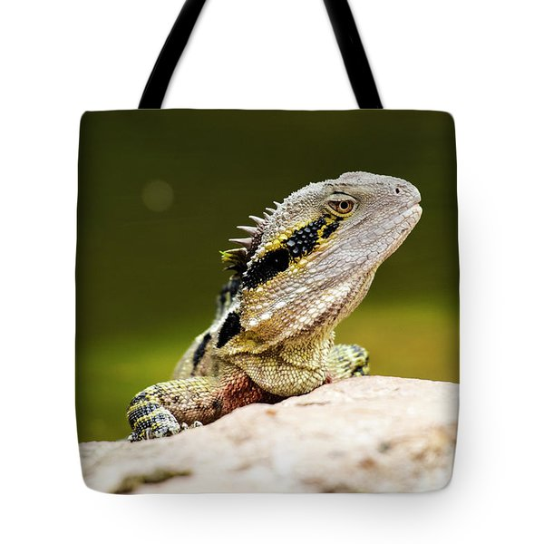 Tote Bag featuring the photograph Eastern Water Dragon Lizard by Rob D Imagery