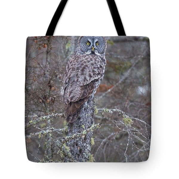 Tote Bag featuring the photograph Great Gray Owl Sax Zim Bog by Paul Schultz