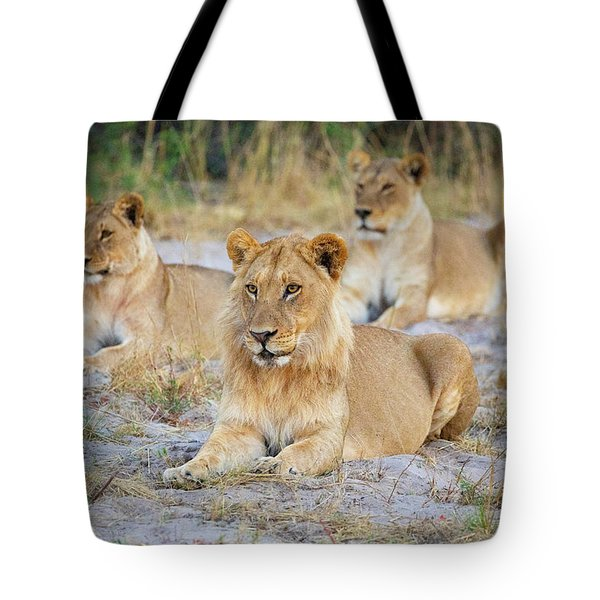 Tote Bag featuring the photograph 3 Lions by John Rodrigues