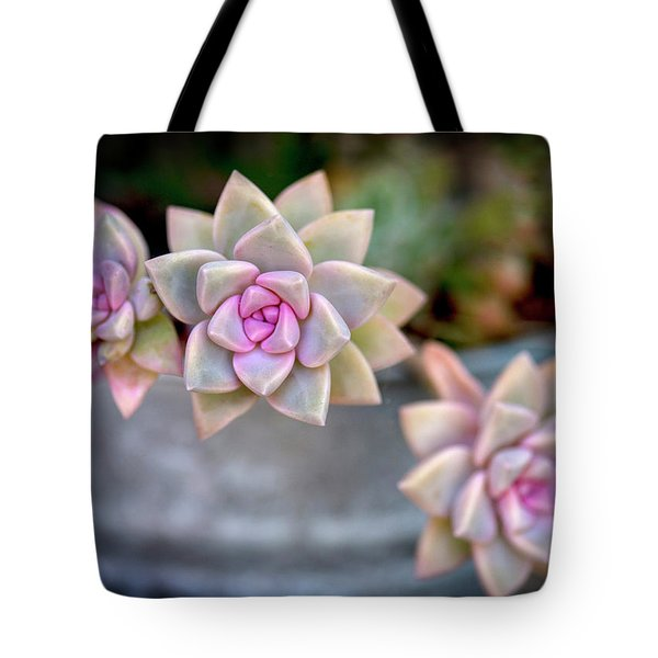 Tote Bag featuring the photograph 3 Succulents by John Rodrigues