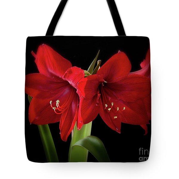 Amaryllis Merlot' Tote Bag