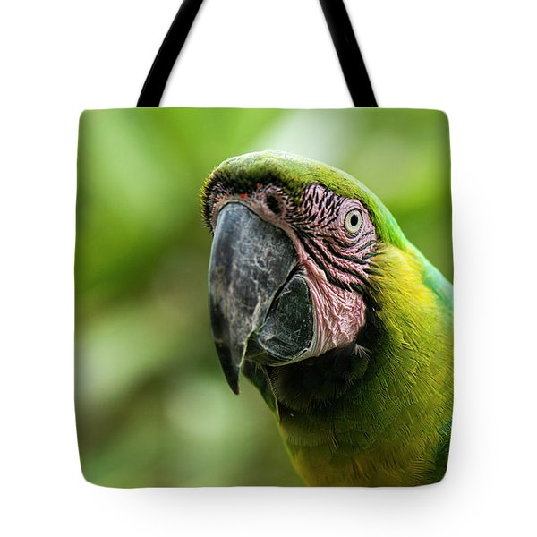 Tote Bag featuring the photograph Beautiful Macaw Bird by Rob D Imagery