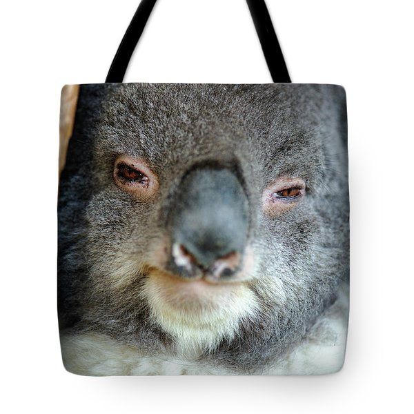 Tote Bag featuring the photograph Cute Australian Koala Resting During The Day. by Rob D Imagery