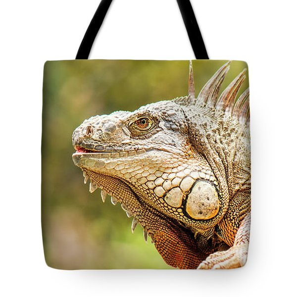 Tote Bag featuring the photograph Green Iguana by Rob D Imagery