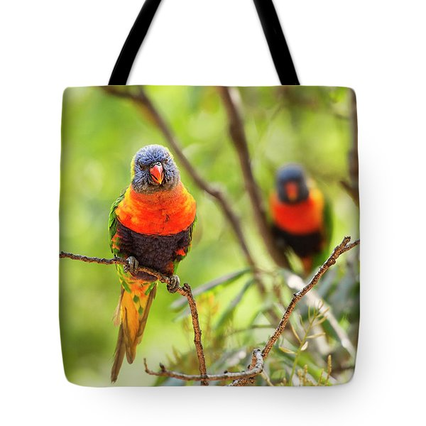 Tote Bag featuring the photograph Rainbow Lorikeets by Rob D Imagery