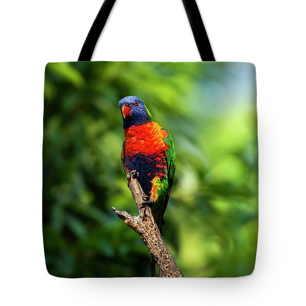 Tote Bag featuring the photograph Rainbow Lorikeet by Rob D Imagery