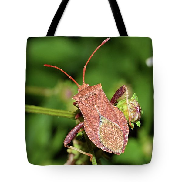 Leaf Footed Bug Tote Bag