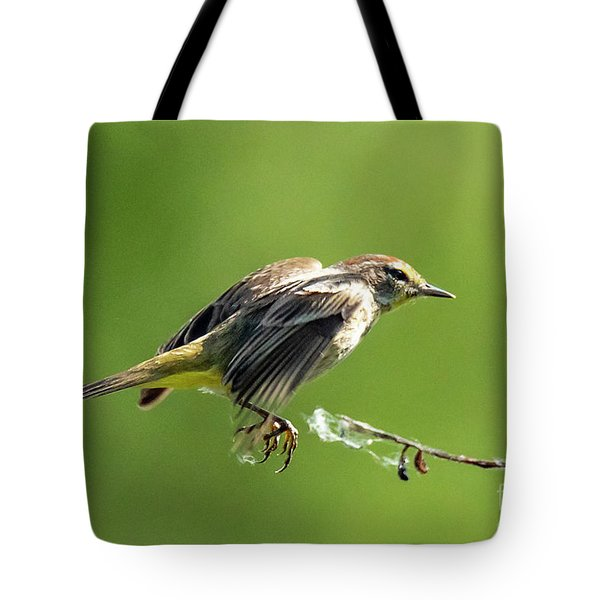 Tote Bag featuring the photograph Warbler by Michael D Miller