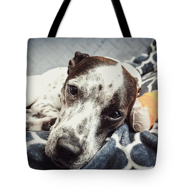 Abbey And Her Injured Paw Tote Bag