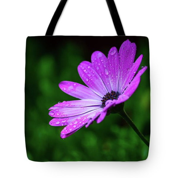 African Daisy II Tote Bag